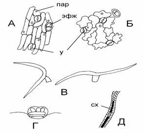 Рисунок губчатой клеток ткани