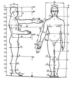 Anthropometric